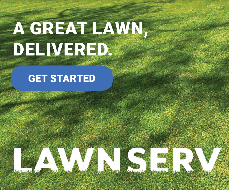 How to revive a lawn