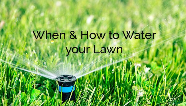 Watering your Lawn, When and How