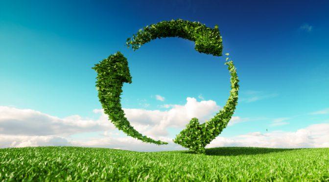 Organic Lawn Plan