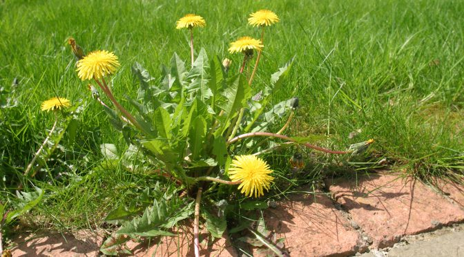 3 Steps to Getting Rid of Those Weeds
