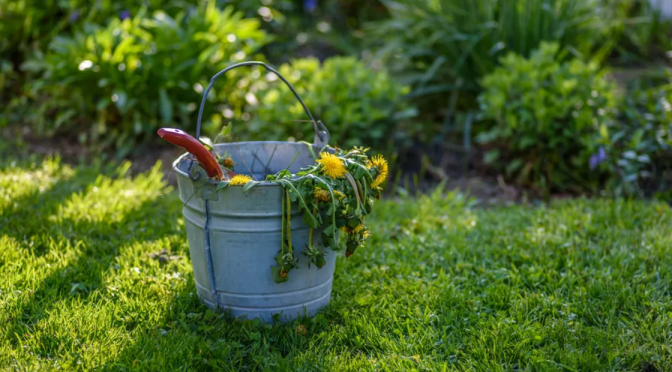 BASIC LAWN CARE TIPS FOR BEGINNERS